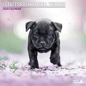 Staffordshire Bull Terrier 2020 Calendar