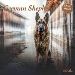 German Shepherd Deluxe 2020 Calendar