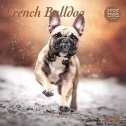 French Bulldog Deluxe 2020 Calendar