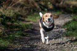 Dog Training Should be Fun