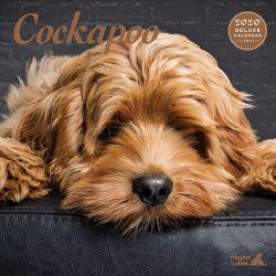 Cockapoo Deluxe 2020 Calendar
