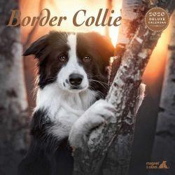 Border Collie Deluxe 2020 Calendar