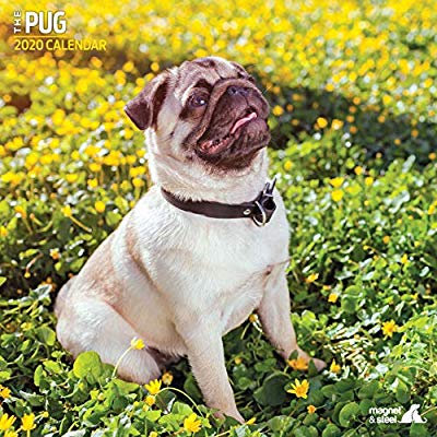 Pug 2020 Calendar