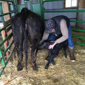 Adopt-a-Rancher
