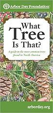 what tree.jpg