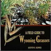 wy grasses.jpg