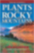 rocky mts.jpg