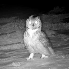 Trail Camera Surveys