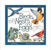 birds nests and eggs.jpg