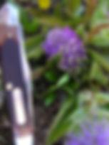 2-May, Besseya wyomingensis  3 - Copy.JP