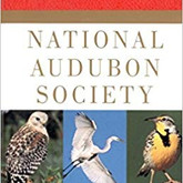 audo birds.jpg