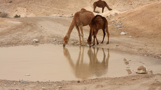 WEATHER: Monsoon Delay Brings Desert Flood... And Heat!