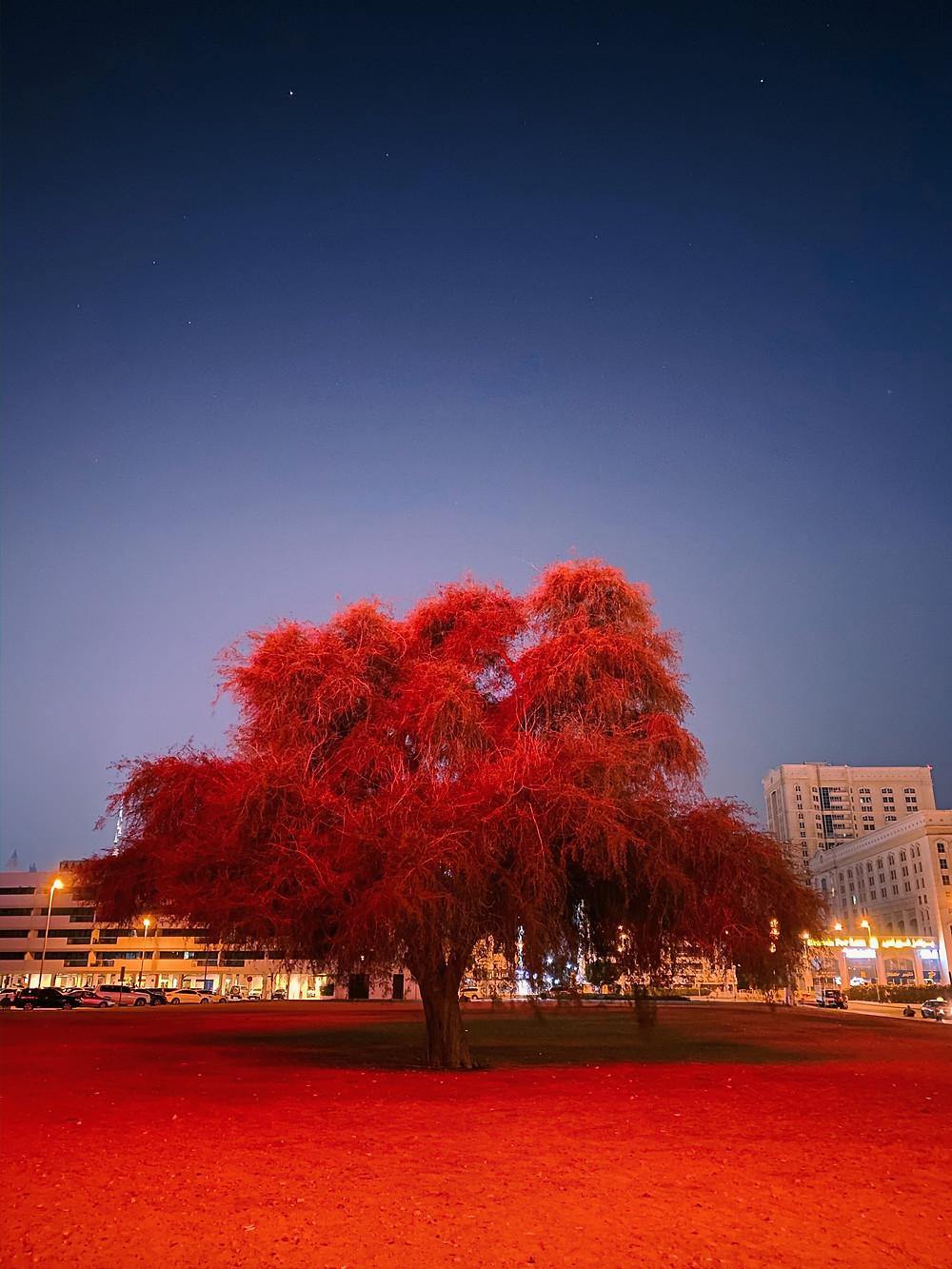 Árvore com folhas vermelhas sob um céu estrelado
