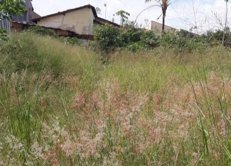 Prefeitura estuda aplicação de 'lei do abandono' em área denunciada pelo vereador Rafael de Angeli