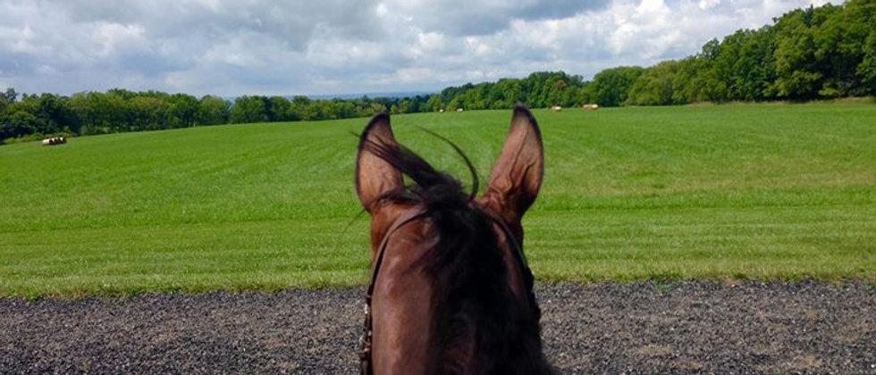 Horse, horseback riding, field, scenic, farm, Upstate NY