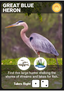 Backyard Birding's Bird cards are designed to give the information you need to move through your turn in the order you'll need it.