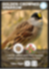 Golden-Crowned_Sparrow_Bird_Card.png