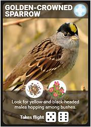 Golden-Crowned_Sparrow_Bird_Card.png