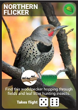 Backyard_Birding_Bird_Cards.PNG