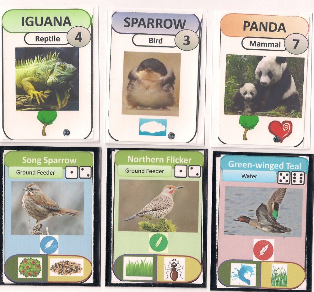 A comparison between older versions of the Backyard Birding game cards.