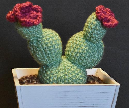 Bobble Cactus