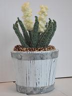 Yucca in Barrel Pot
