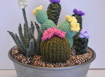 2019.01.10  Cacti & Yucca #2_edited.jpg