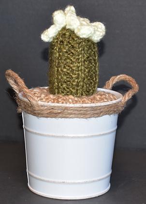 Tall Ribbed Cactus