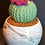 Thumbnail: Ribbed Round Cactus
