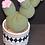 Thumbnail: Bobble Cactus