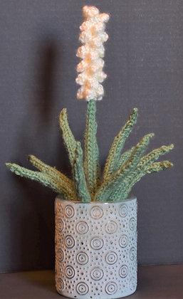Medium 1-Stem Yucca Plant