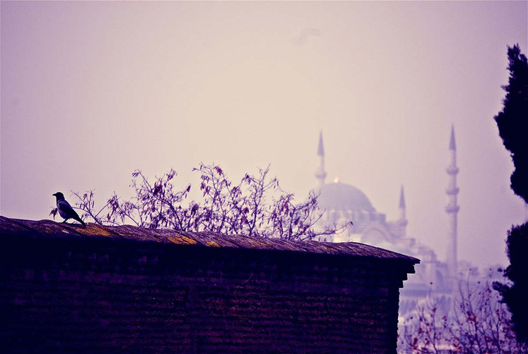 purple+rain.jpg
