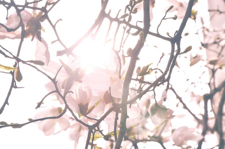 shy+light.jpg