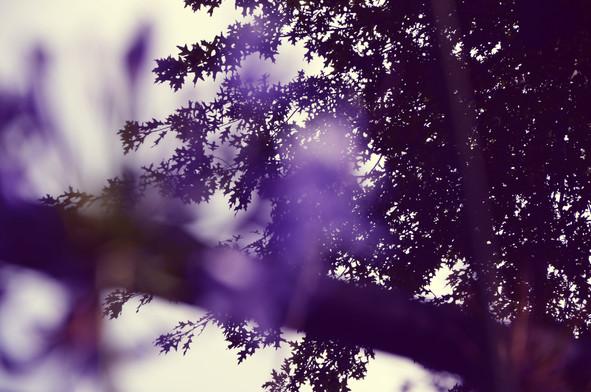 wind of spring.jpg