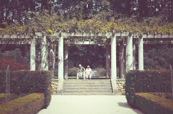 the rose garden.jpg