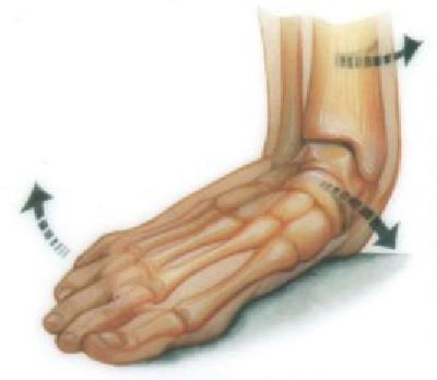 A befelé billenő boka elmozdítja és forgatja a sípcsontot is (http://www.totallyfeet.net/foot-facts/structural-foot-problems/flat-feet/)