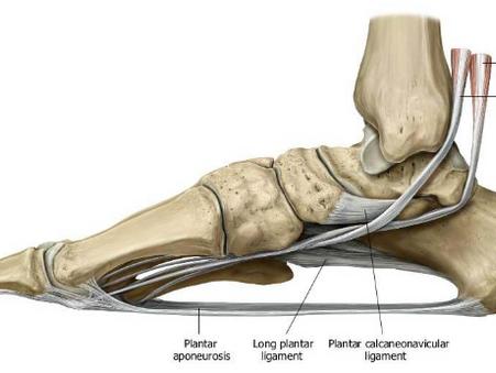 A lábboltozat és ami felette van
