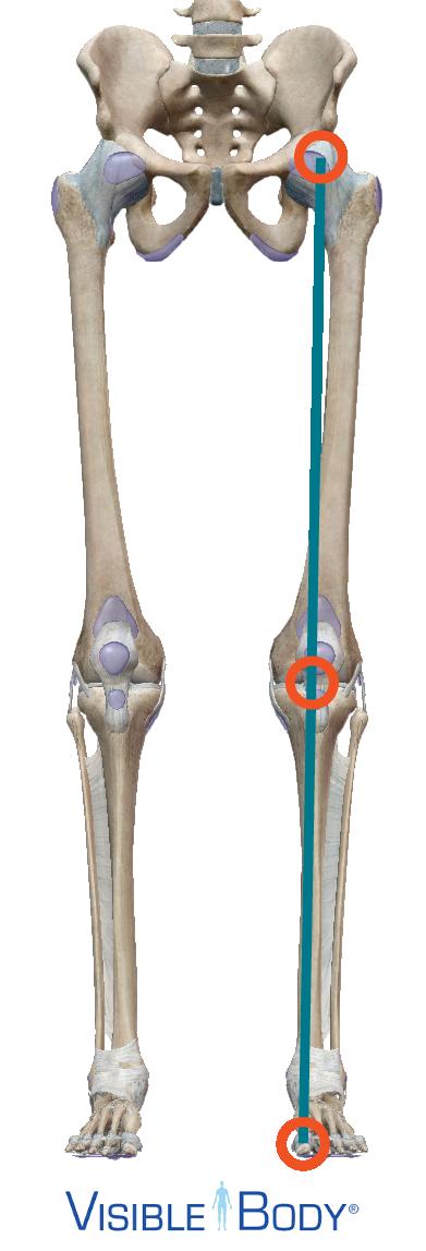 Az erők hatásvonala a lábon belső talpélen: a térd közepén halad át