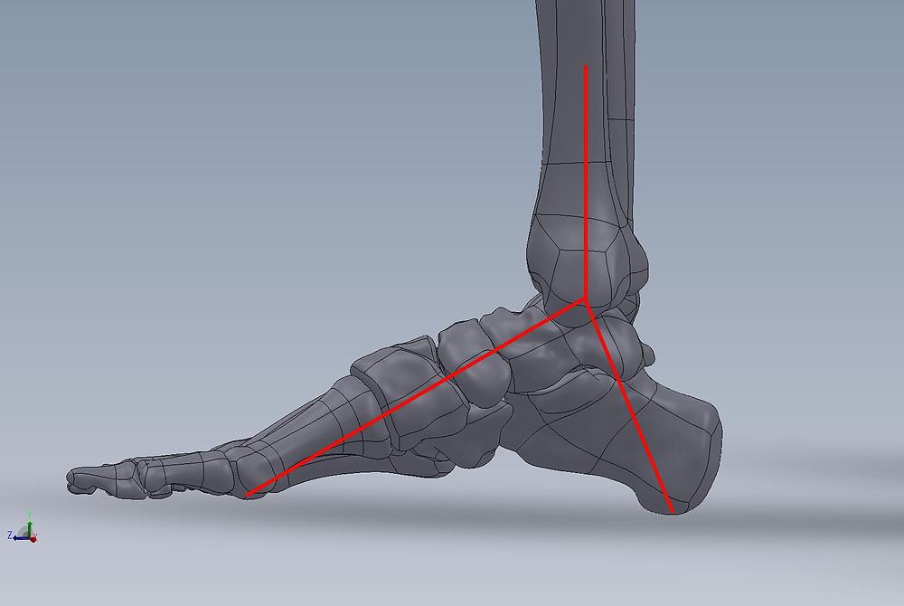 A testsúly eloszlása a lábon