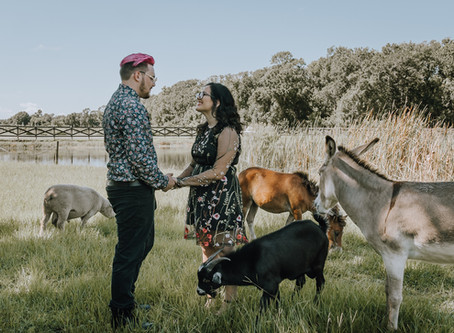 Enchanting Blueberry Farms Engagement With The Cutest Farm Animals