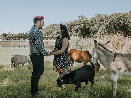 Enchanting Farm Engagement With The Cutest Farm Animals