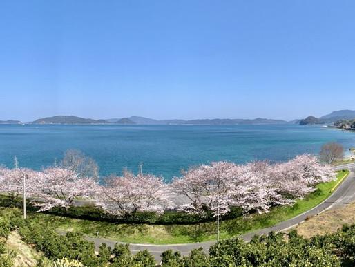 桜の頃のジャム屋日記(4月号)