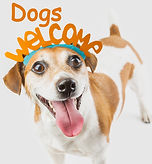 Adorable cute small smiling dog with Welcome word on the head. Gray background_edited.jpg