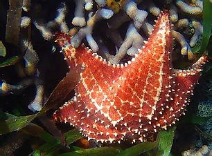 coral4.jpg