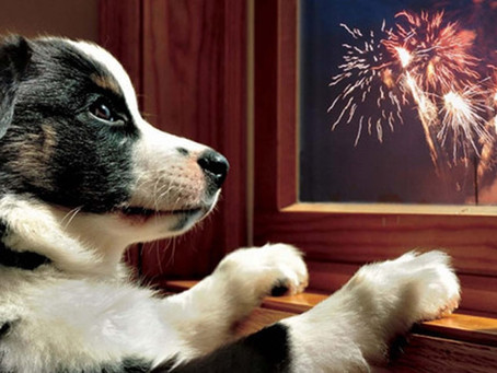 Fireworks & Thunder - Why Dogs React & How We Can Help
