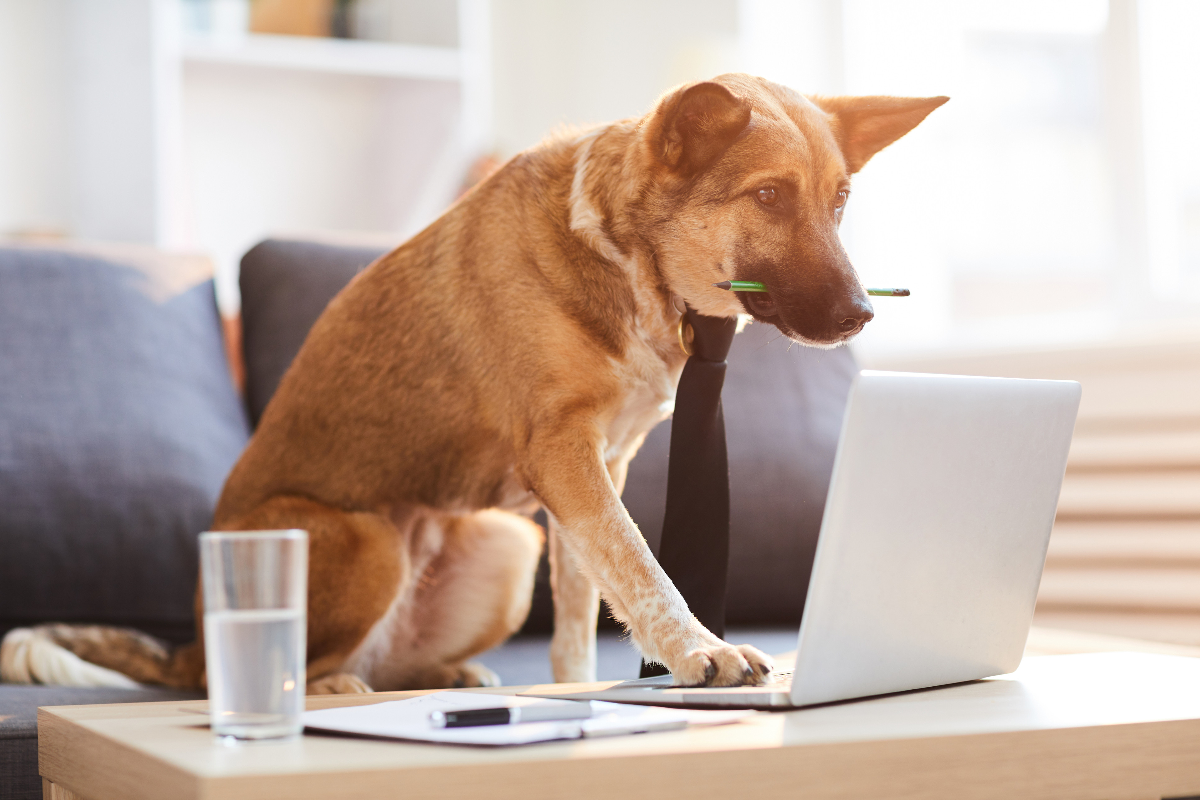 Online Noble Canine Consultation
