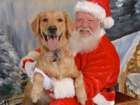 A DOGS CHRISTMAS GIFT