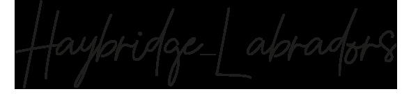 haybridge-labradors_logo.png