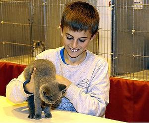felinology cat show