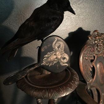 Corvo - O Passaro das Bruxas